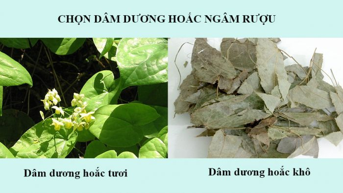 dam-duong-hoac-ngam-ruou